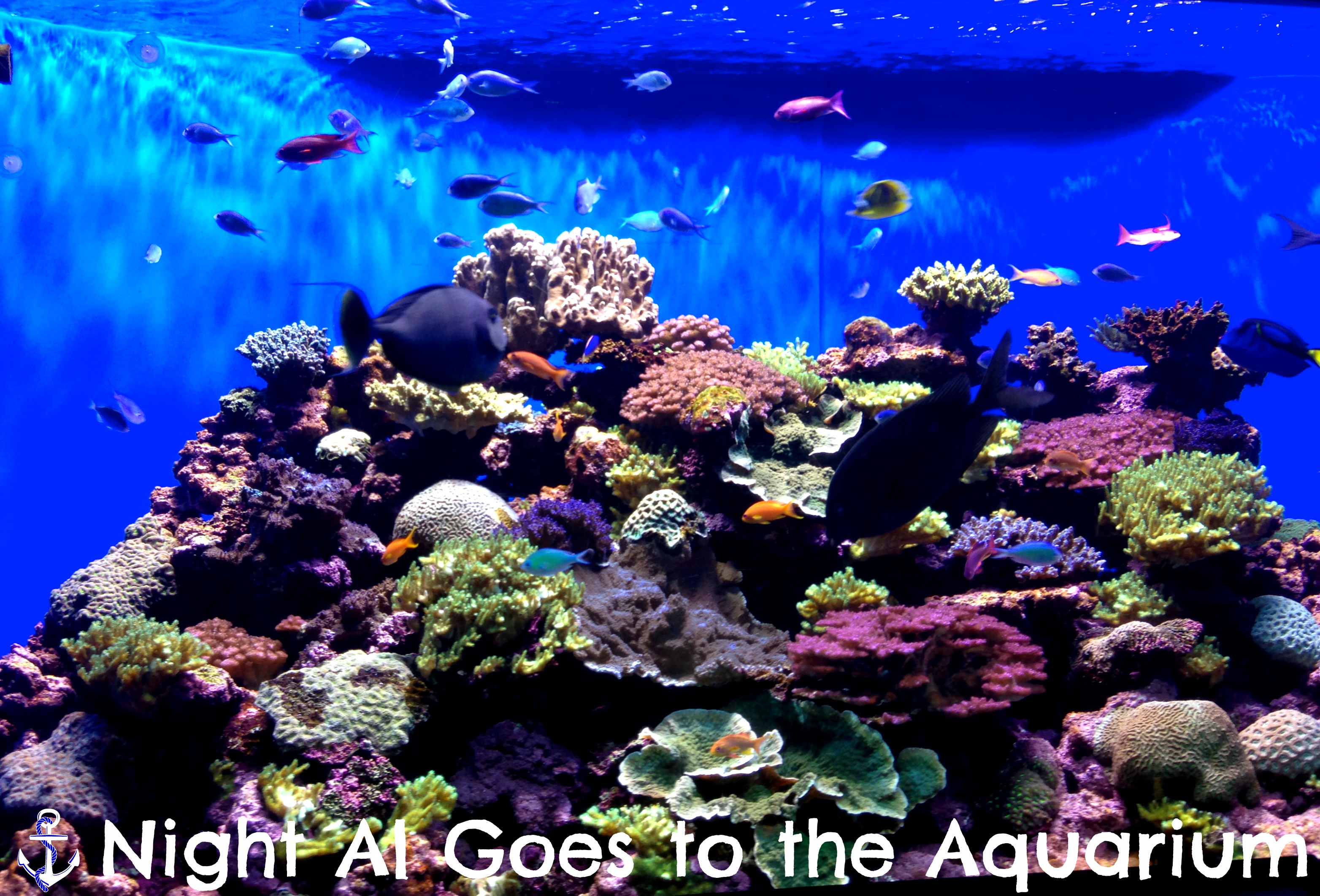 Night Al Goes To The Aquarium Hoots Of A Night Al