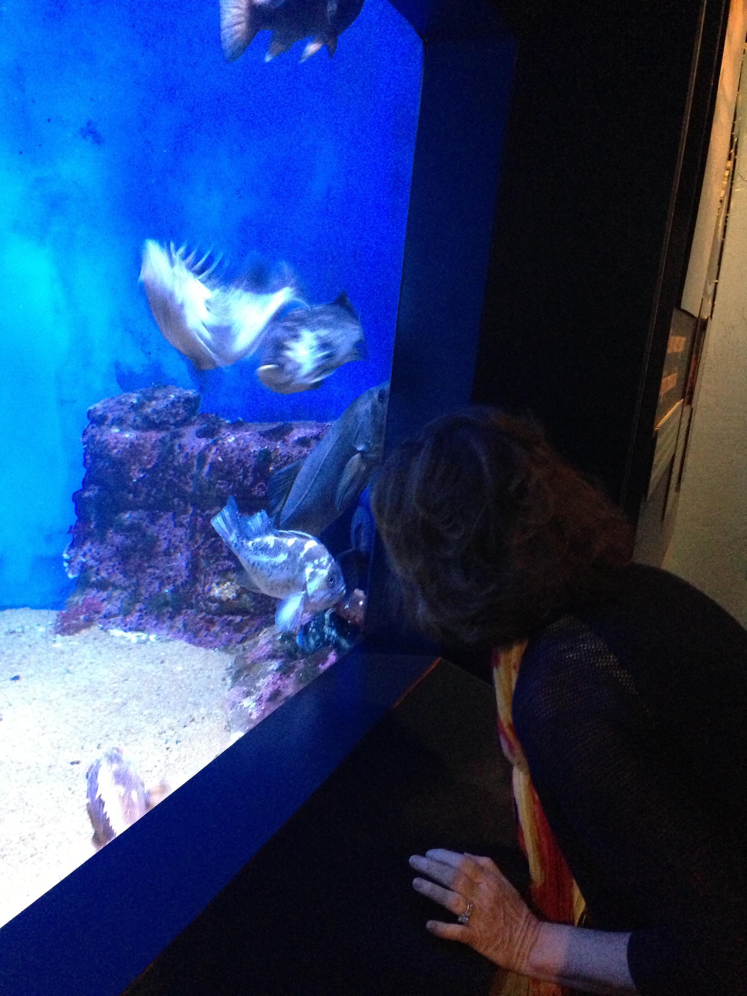 Sassy Kat Visits La Jolla: Part 2